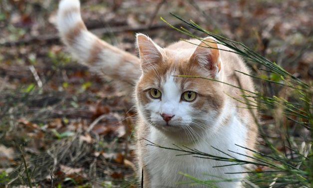 Che cosa non piace ai gatti annusare? Fatti interessanti