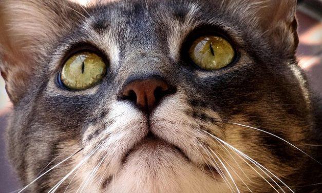 I gatti sono animali da imballaggio? Come mantenere la specie animale adeguata