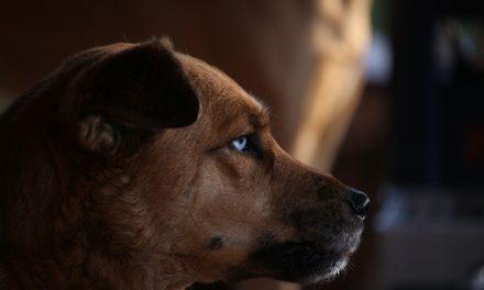 Posizioneusky in estate: come mantenere la specie del tuo cane adatto