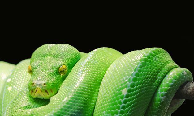 Snakebite interpretazione sogno: un tentativo