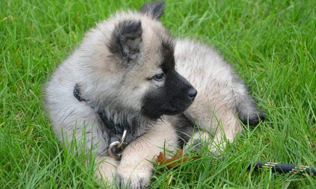 Cane mangia l'erba: prendersi cura di esso