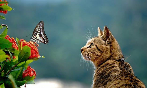 Cat ha macchie calve: cosa fare?