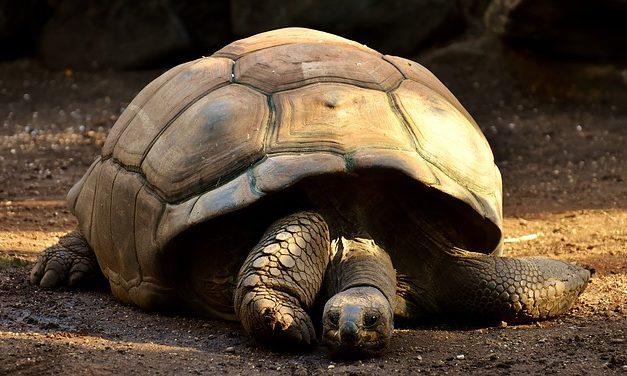 Che cosa mangiano le tartarughe rosse? Informazioni interessanti