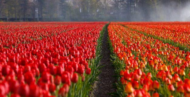 Emigrazione in Olanda: cosa si dovrebbe considerare