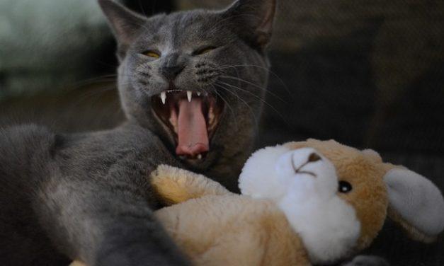 """""""Il mio gatto non si coccola"""": cosa fare?"""