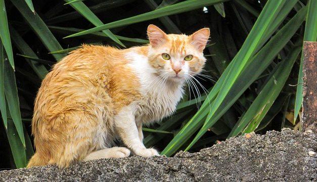 Installare da soli lo sportello del gatto: ecco come funziona