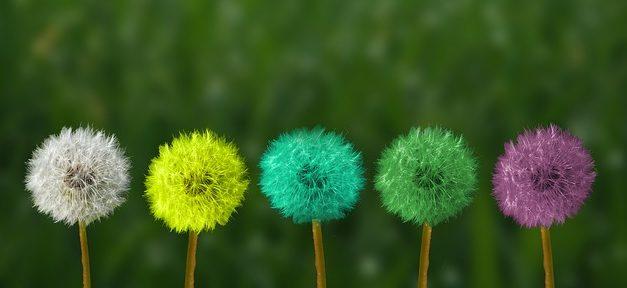 Germinare semi erba