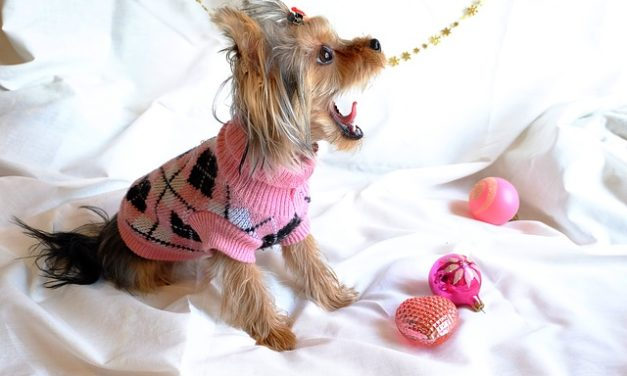 Capodanno con il cane: così tranquillo