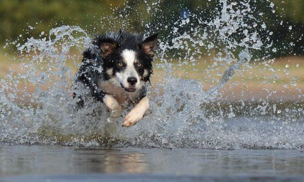 Collare di soffocamento per cani – come usarlo