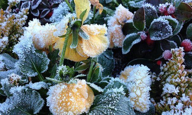 Cura delle tombe: Suggerimenti per la semina invernale