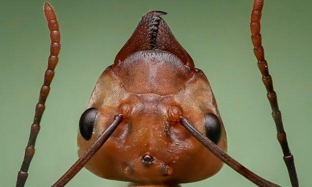 Formiche in casa: come fare una formica terrario