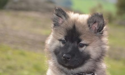 Praga Rattler: è possibile allevare i cuccioli della razza come segue