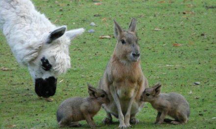 Alzare i bambini conigli con latte di coniglio: è così che funziona il sollevamento delle mani