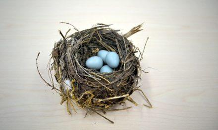 Il mio budgie ha messo un uovo: cosa fare?
