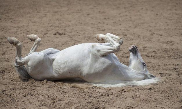 Mercato ippico Polonia: qui potete aiutare i cavalli