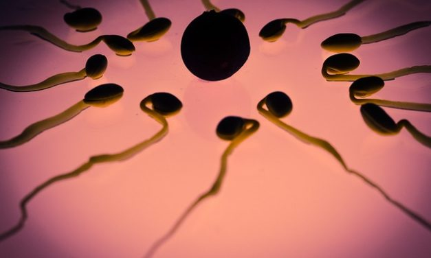 Quando è l'ovulazione? Come imparare a conoscere il tuo ciclo