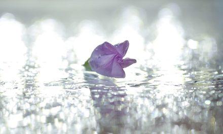 Corone di edera e fiori legano correttamente