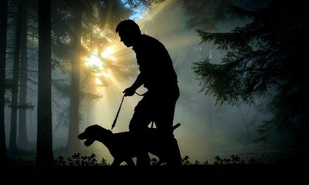 Il cane non viene quando grido: è così che lo impara