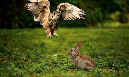 Sollevare il coniglio con bottiglia: questo è come sostituire la madre
