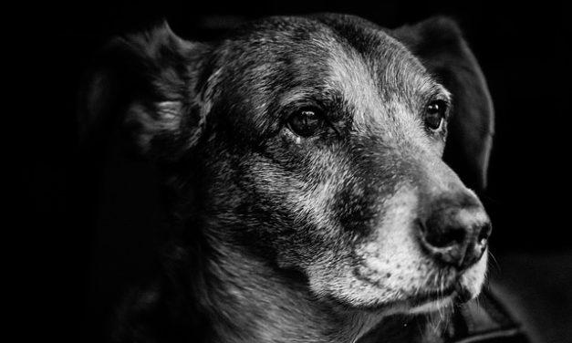 Educazione dei cani: capire come abbaiare correttamente