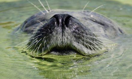 Impostazione degli acquari: è così che si crea un esemplare unico