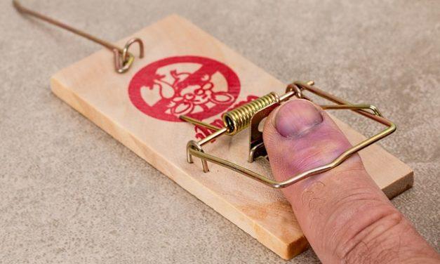 Impostazione della trappola per mole: Istruzioni