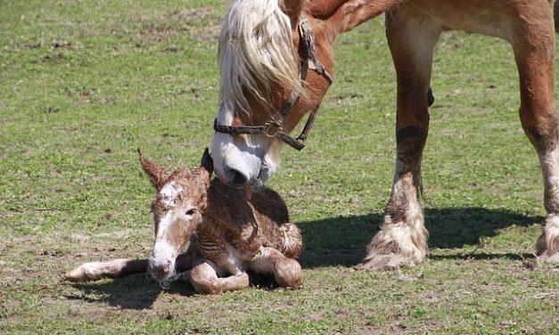 Kit pulizia cavallo: Nomi e applicazione