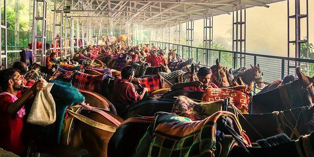 L'acquisto di uno stallone: questo è ciò che si dovrebbe considerare prima di acquistare uno stallone