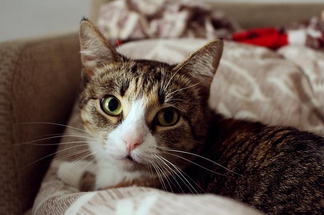 Lavare i gatti: cosa dovresti considerare - Bagno90.com