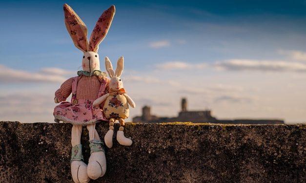 Allevamento di conigli: ciò che si dovrebbe considerare