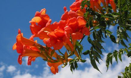 Bromeliade è in fiore: cosa fare?