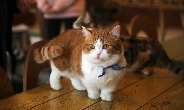 Che cosa significa la scommessa della coda nei gatti?