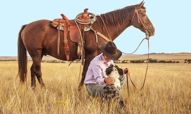 Come posso portare il mio cane con me a cavallo? Ecco come funziona