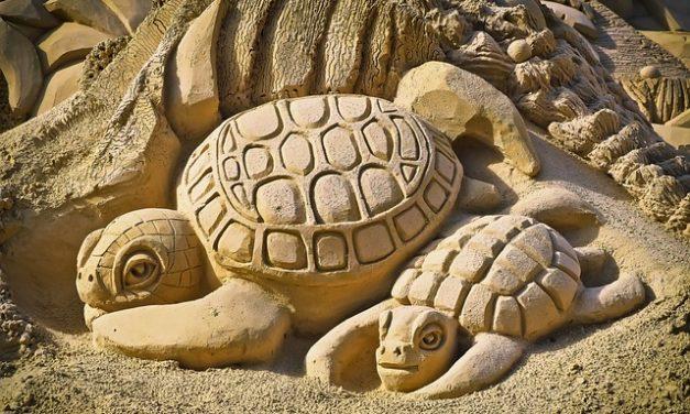 Comprare un mini-turtle: Cose da sapere su tenere e curare