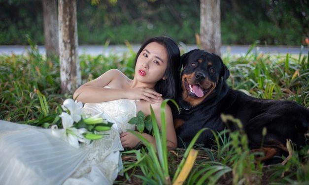 Dopo un morso di cane: cosa fare per prevenire le infiammazioni