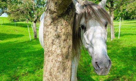Esercizi di fiducia con un cavallo: è così che si fanno