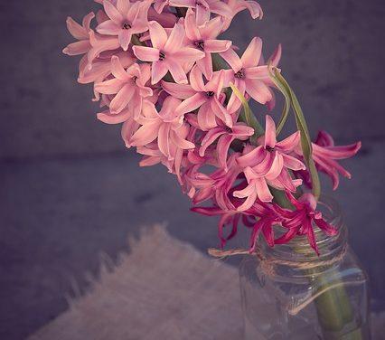 Piantare il vaso dei fiori correttamente