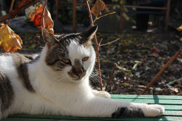 Flatulenza allo stomaco nei gatti: cosa fare?