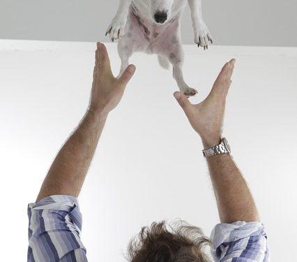 Tosse cane: cosa fare?