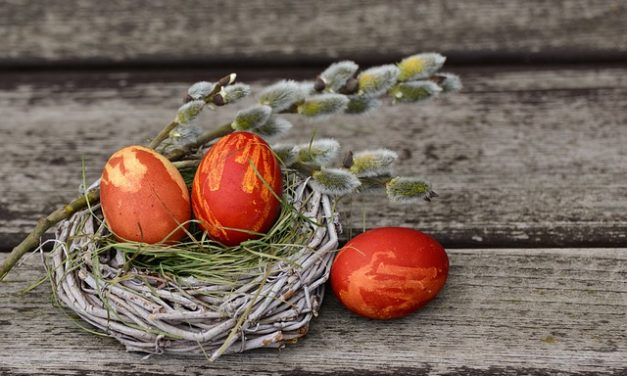 Allevamento uova di anatra: una guida