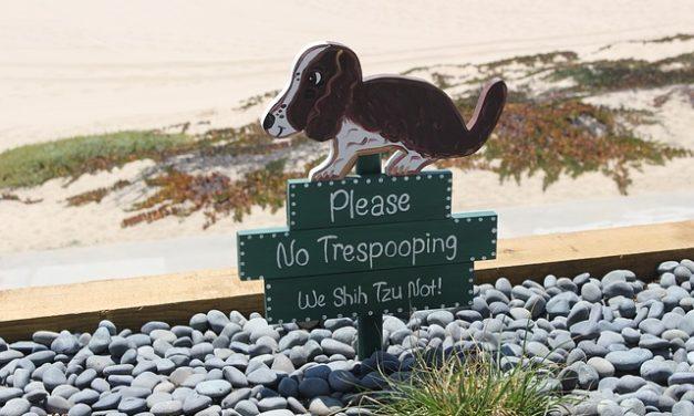 Cane mangiava plastica: come aiutare rapidamente