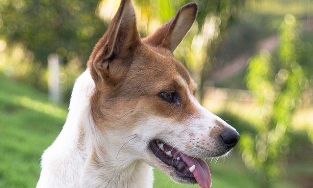 Panico cane: come posso calmarlo?