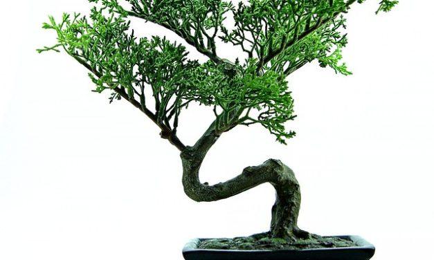 Potatura Bonsai: come farlo
