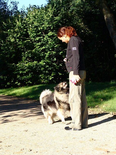 """Acquisire la """"licenza per cani"""": è così che puoi dimostrare la tua esperienza"""