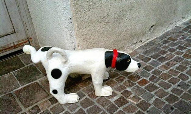 """""""Dove possono i cani pipì: dappertutto o solo in certi luoghi""""? Fatti interessanti"""