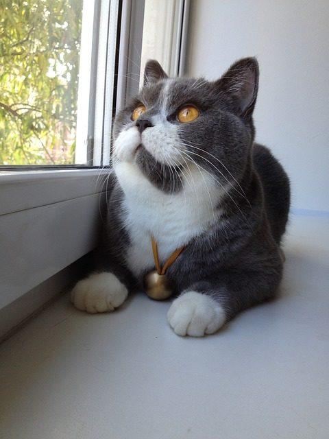 Piccole razze di gatto cosa si dovrebbe sapere sulla cura for Avere una casa costruita sulla terra