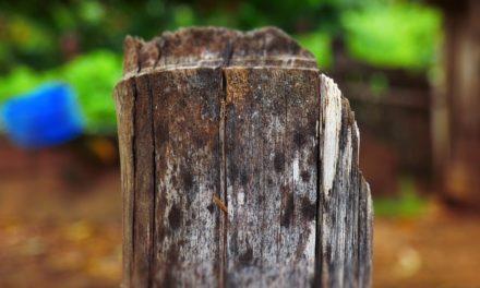 Rimuovere radici di bambù