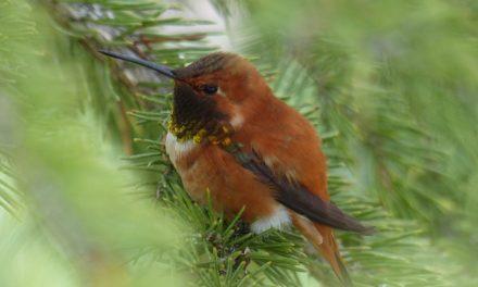 Abbattimento abete rosso: ottenimento del permesso per il giardino