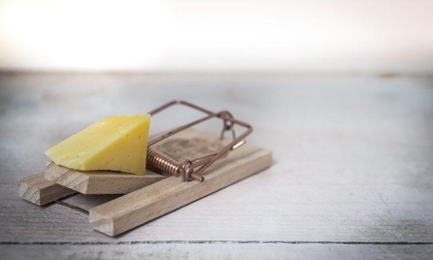 Costruisci la tua trappola per coniglio: come costruire una trappola live