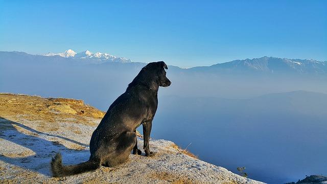 Tassa sui cani per uno Yorkshire Terrier: Suggerimenti